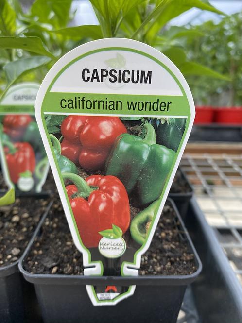 Capsicum California Wonder 9cm