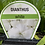 Thumbnail: Dianthus White 6 cell K