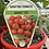 Thumbnail: Grafted Tomato Sweet 100 1.3L