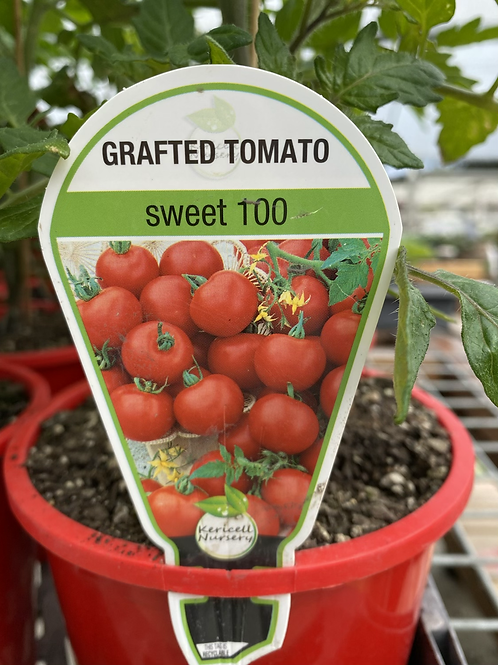 Grafted Tomato Sweet 100 1.3L