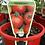 Thumbnail: Grafted Tomato Money Maker 1.3L