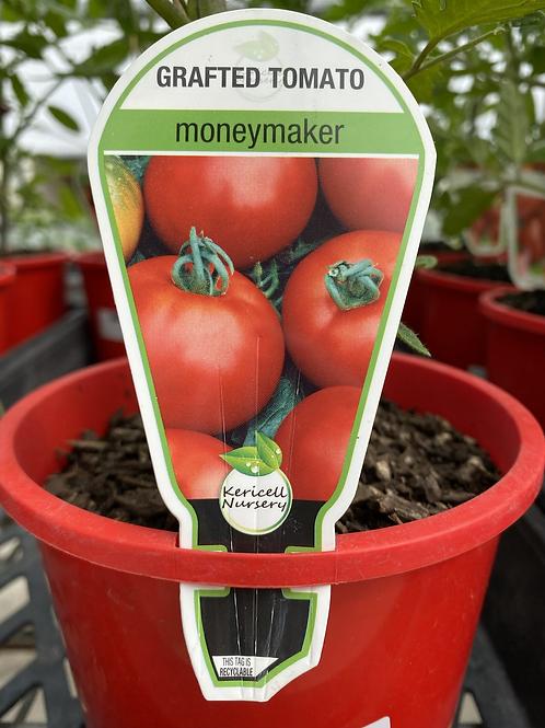 Grafted Tomato Money Maker 1.3L