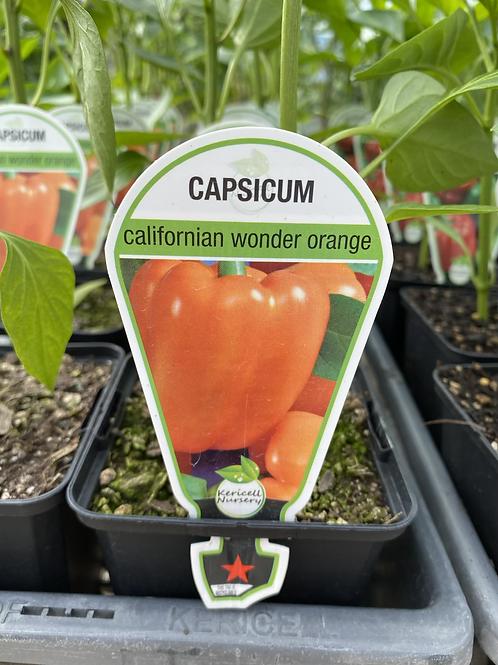 Capsicum Orange 9cm