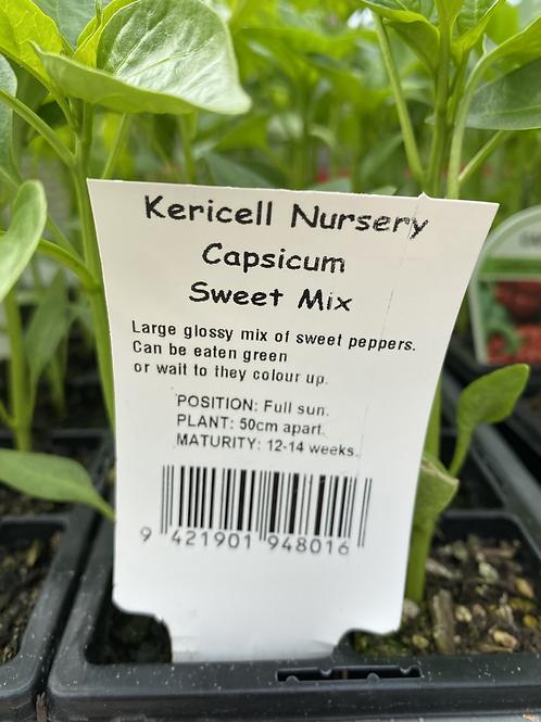 Capsicum Sweet Pepper Mix 6 cell K