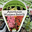 Thumbnail: Antirrhinum Madame Butterfly 6 cell K