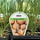 Thumbnail: Onion Brown 6 cell K