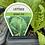Thumbnail: Lettuce Cos Green 6 cell K