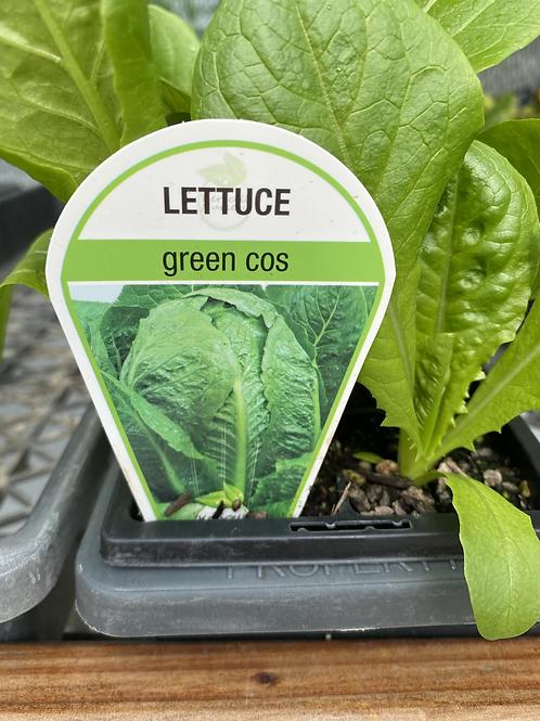 Lettuce Cos Green 6 cell K
