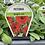 Thumbnail: Petunia Red 6 cell K