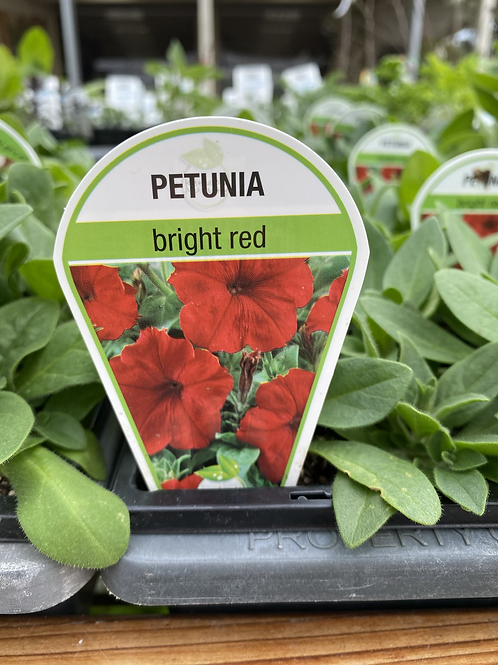 Petunia Red 6 cell K