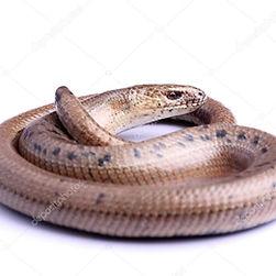 змея новый сайт.jpg