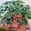 Thumbnail: Everbearing Strawberry