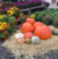 large pumpkins.jpg