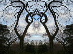 023. Ft Tryon Tree