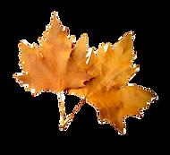 14-149252_autumn-leaf-png-image-fall-lea