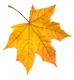 170-1705883_autumn-leaves-png-images-fre