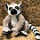 Thumbnail: Ring-Tailed Lemur plush toy