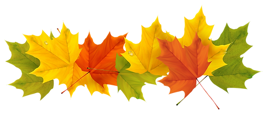 Transparent_Fall_Leaves_PNG_Picture.png