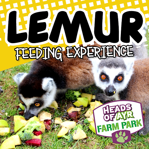 Lemur Feeding Experience Voucher