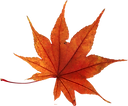 autumn_leaves_PNG3582.png