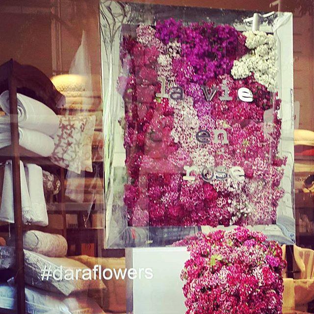 #daraflowers #arqrominacalzi #giroarenales #dara #lavieenrose