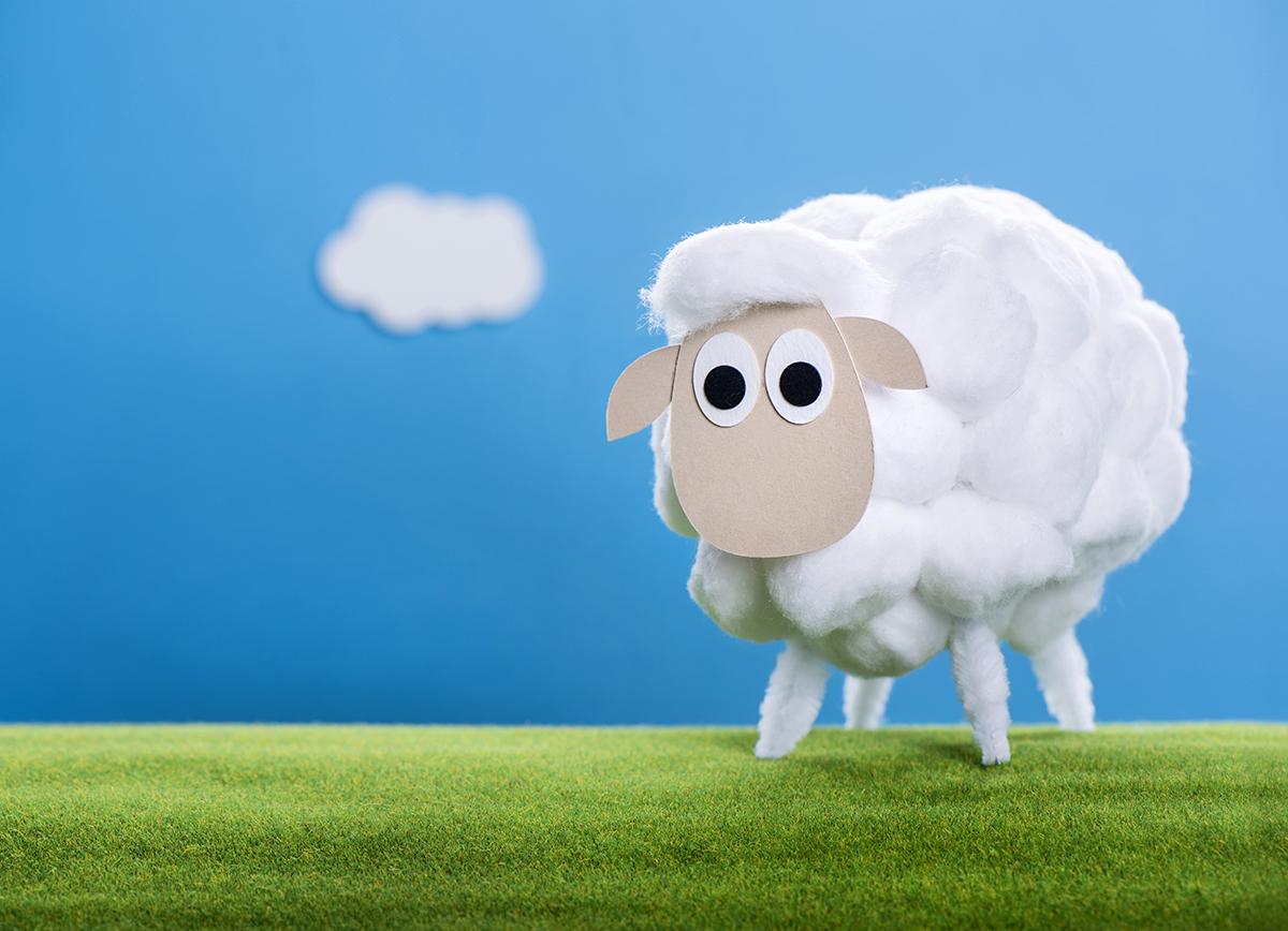 Eid Al-Adha sheep