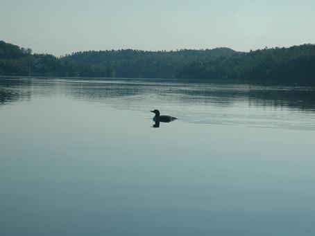 Let's Keep Long Lake Healthy