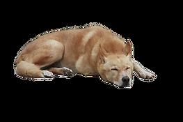 dog image 5.png