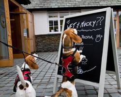 Bertie and Beanie, reading the menu!