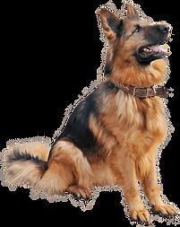 dog image 1.png