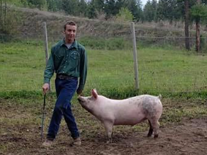 Chris Gregr Swine.tiff