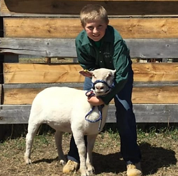 Sheldon Blumhagen Sheep.tiff