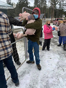 Swine Weigh-In 5.jpg