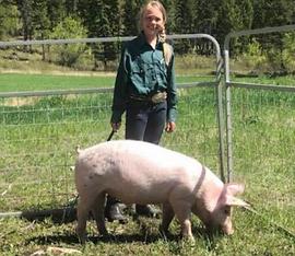 Payton Hutchinson Swine.tiff