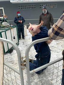 Swine Weigh-In 4.jpg