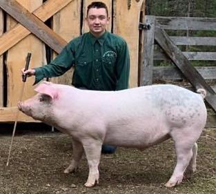Hunter Wilson Swine .tiff