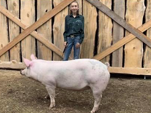 Emma Wilson Swine.tiff
