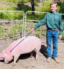 Caleb Oestreich Swine.tiff