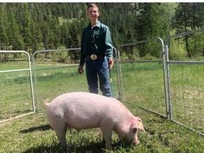 Sawyer Hutchinson Swine (recrop).tiff