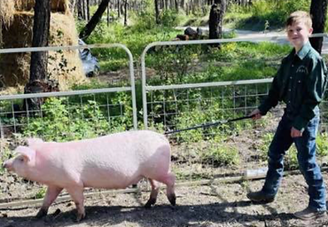 Ronan Oestreich Swine.tiff