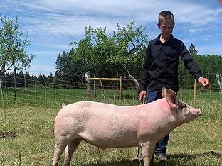 Sawyer H Swine.jpg