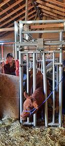 Beef 3.jpg
