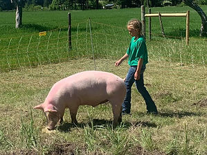 Payton H Swine.jpg