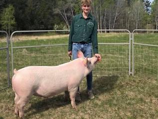 Riley Stankewich Swine.tiff