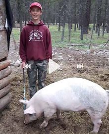 Donald Lippert Swine.jpg