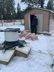 Swine Weigh-In 8.jpg