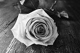 donor rose.jpg