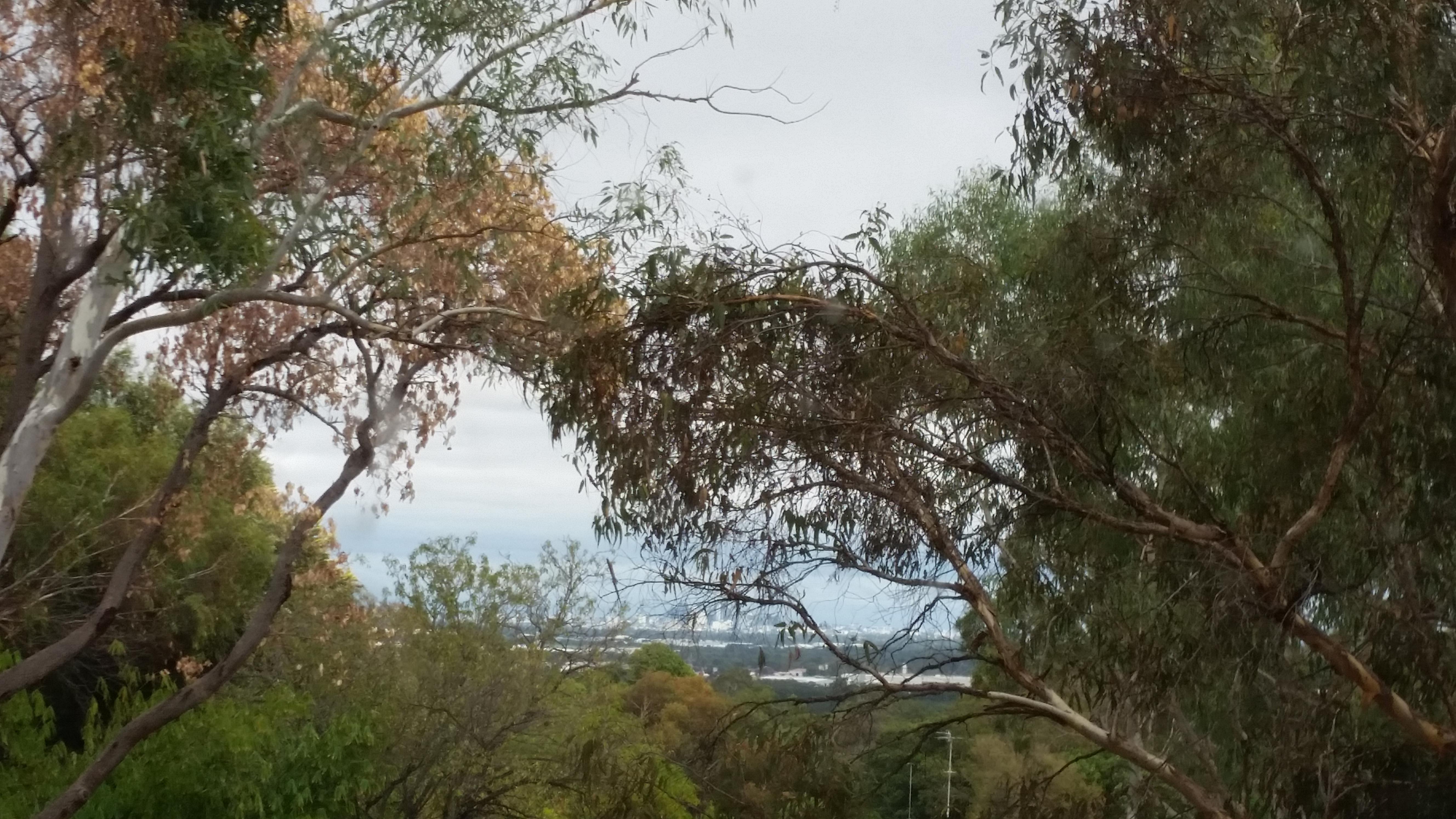 Window view from Aldridge cabin