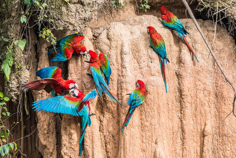 Puerto Maldonado Jungle Lodges offer Excursions to Nearby Clay Licks