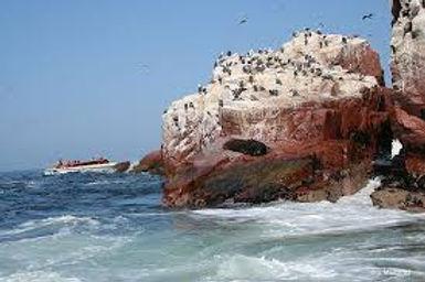Ballestas Islands Tour